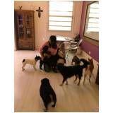 Spa para Cachorros preço no Ibirapuera