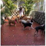 Spa para cães em Alphaville