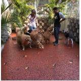 Spa para Cachorros