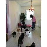 Spas para Cachorros na Lapa