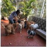 Spas para cães no Brooklin