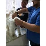 Stripping Scottish Terrier preço no Campo Limpo