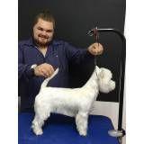 Trimming em Cães