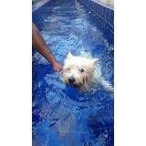 tratamento com natação para cães no Grajau