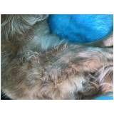 tratamento de fisioterapia para cachorro em Ferraz de Vasconcelos