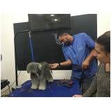 Trimming em Fox Terrier preço na Vila Sônia