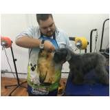 Trimming em Golden Retriever no Itaim Paulista