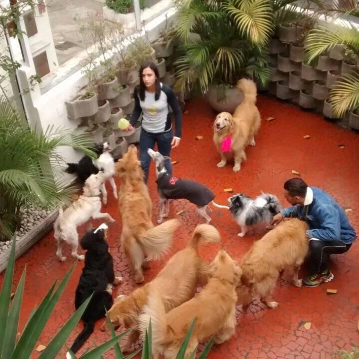 Tratamento de Fisioterapia Canina Preço no M'Boi Mirim - Fisioterapia Canina em São Paulo