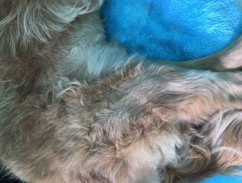 Tratamento de Fisioterapia para Cachorro na Cidade Dutra - Fisioterapia Canina em Sp