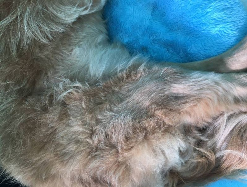 Tratamento de Fisioterapia para Cachorro no Jardim Ângela - Fisioterapia de Cachorro