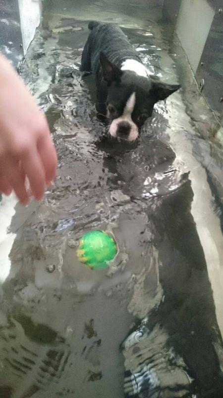Tratamento Fisioterápico para Cães em São Caetano do Sul - Fisioterapia Canina em São Paulo
